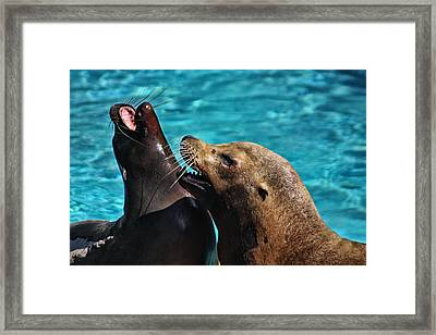 Laughing Seals Framed Print by Karol Livote