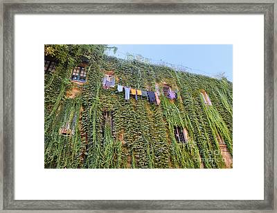 Laundry Framed Print by Ed Rooney