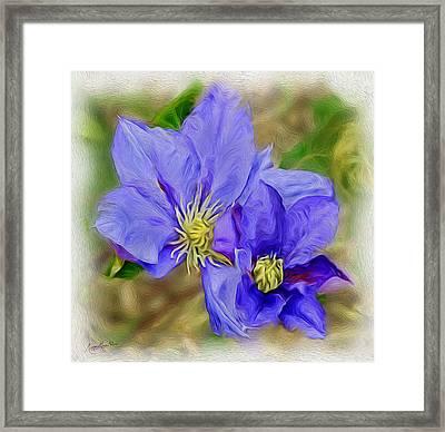 Lavendar Blue Framed Print
