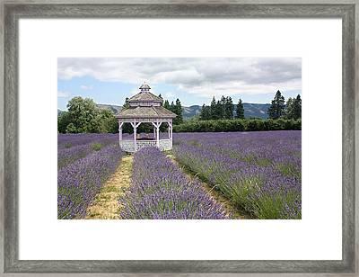 Lavender Field, Usa Framed Print