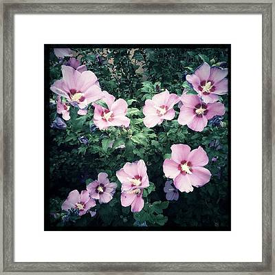 Lavender Hibiscus Flowers #hipstamatic Framed Print
