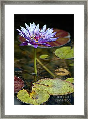 Lavender Lily Framed Print by Tonia Noelle