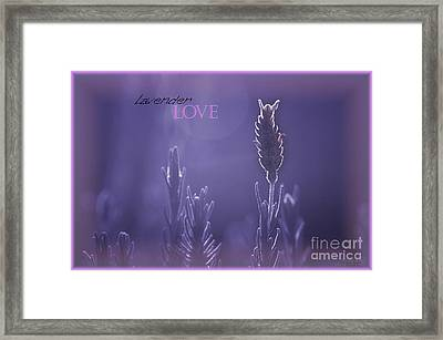 Framed Print featuring the photograph Lavender Love by Vicki Ferrari