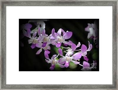 Lavender Orchids Framed Print