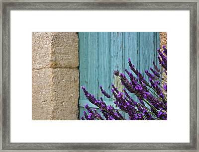 Lavender Plant Framed Print by Barbara Piancastelli