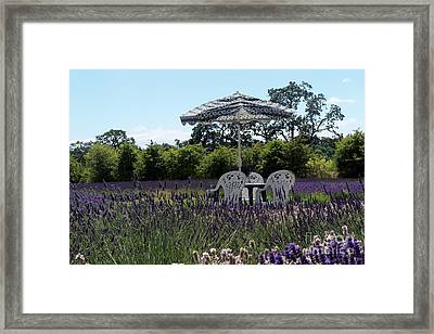 Lavender Tea Time Framed Print by Laurel Thomson