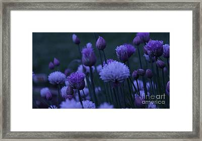 Lavender Twilight Framed Print by Iman Trek