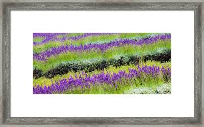 Framed Print featuring the photograph Lavender2 by Ryan Weddle