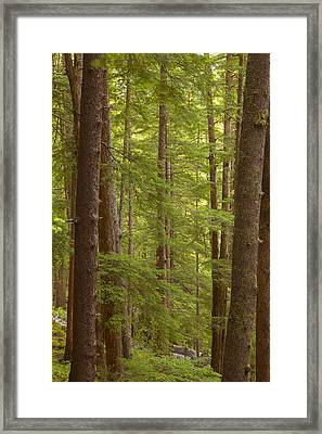 Layers Of Green Framed Print by Tim Grams