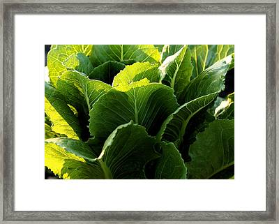 Layers Of Romaine Framed Print by Angela Rath