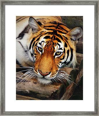 Lazy Framed Print