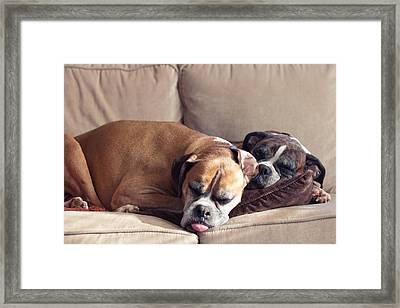 Lazy Boxers Framed Print by Stephanie McDowell
