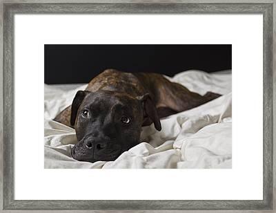 Lazy Days Framed Print by Drew Castelhano