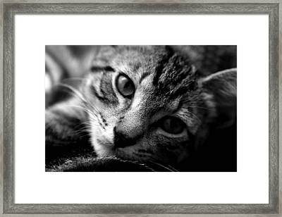 Lazy Days Framed Print
