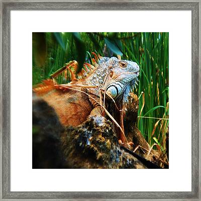 Lazy Lizard Lounging Framed Print