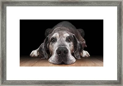 Lazy Framed Print by Marc Huebner