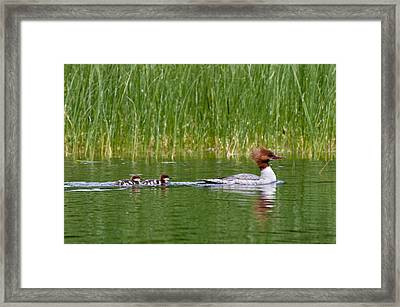 Framed Print featuring the photograph Lazy Swim by Brent L Ander