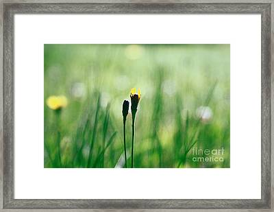 Le Centre De L Attention - Green S0101 Framed Print by Variance Collections
