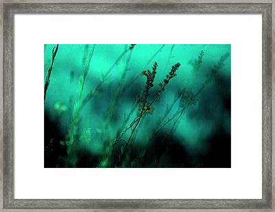 Le Jardin Framed Print by Bonnie Bruno