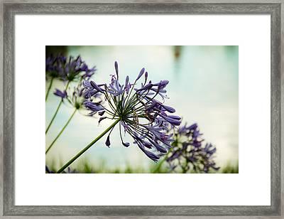 Lead Flower Framed Print by Ezequiel Rodriguez Baudo