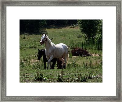 Leader Of The Herd Framed Print