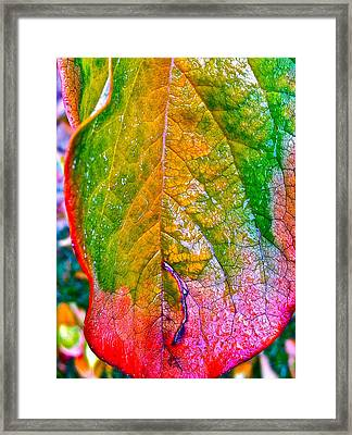 Leaf 2 Framed Print by Bill Owen