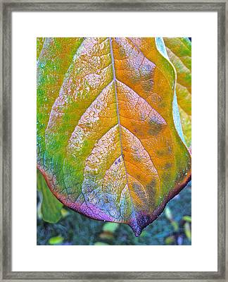 Leaf Framed Print by Bill Owen