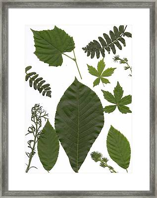 Leaf Collage II Framed Print by Mary Ann Southern