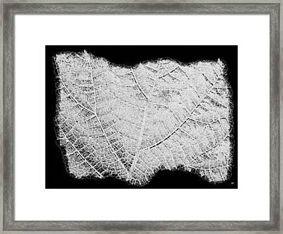 Leaf Design- Black And White Framed Print by Will Borden