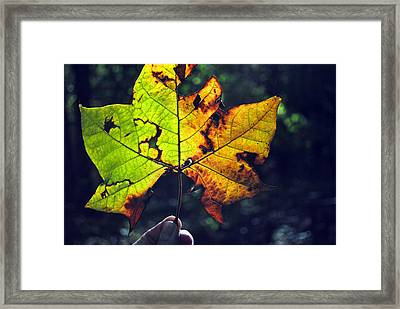 Leaf In Light Framed Print