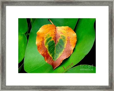 Leaf Leaf Heart Love Framed Print by Renee Trenholm
