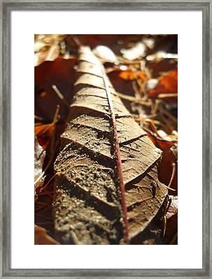 Leaf Litter Framed Print