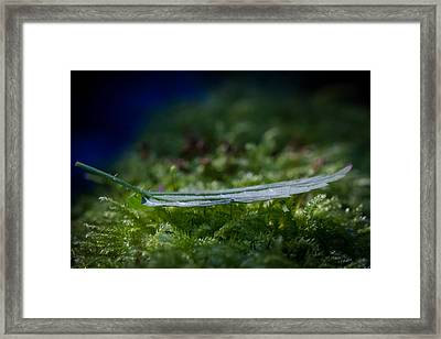 Leaf On Grass Framed Print by Andreas Levi