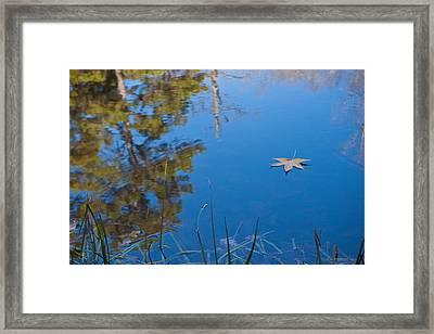 Leaf On Pond Framed Print
