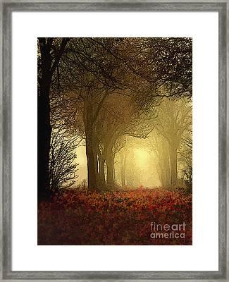 Leaf Path Framed Print by Robert Foster