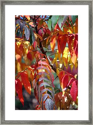 Framed Print featuring the photograph Leaf Peeping by Penny Hunt