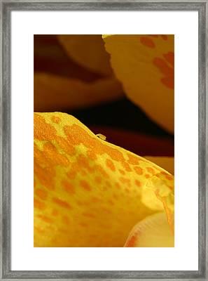 Leaf Precipice Framed Print