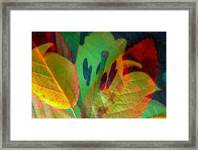 Leaf Reflections Framed Print by Shirley Sirois