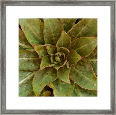 Leaf Star Framed Print