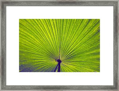 Leaf Framed Print by Sumit Mehndiratta