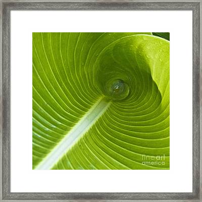 Leaf Tube Framed Print