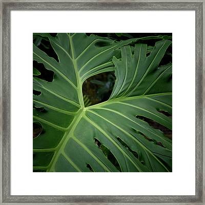 Leaf With Empty Space Framed Print by David Coblitz
