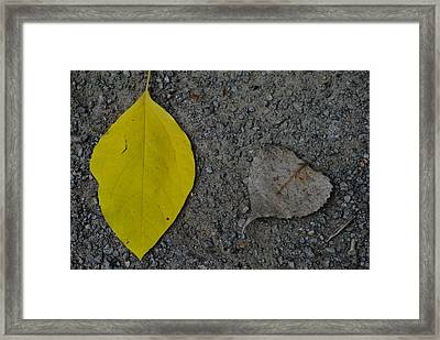 Leaf Yellow And Grey Framed Print