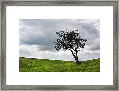 Leafless  Framed Print by Semmick Photo