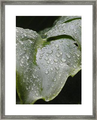 Framed Print featuring the photograph Leafy Greens by Tiffany Erdman