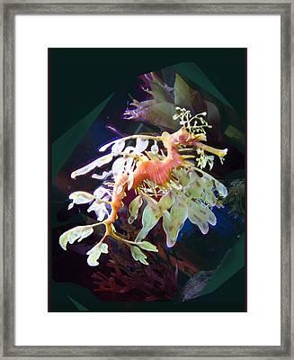 Leafy Sea Dragon Framed Print by Ginny Schmidt