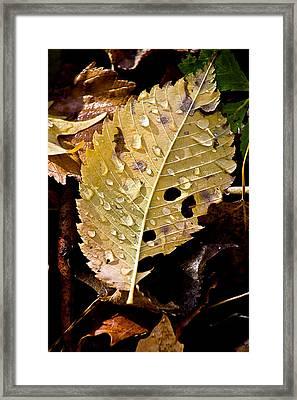 Leafy Tears Framed Print by Burney Lieberman
