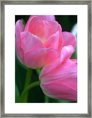 Lean On Me Framed Print by Kathy Yates
