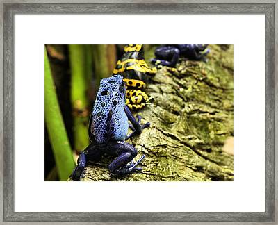 Leap Frog Framed Print by JC Findley