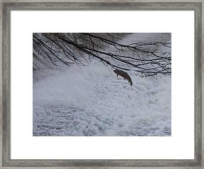 Leap Of Faith Framed Print by Paul Hurtubise